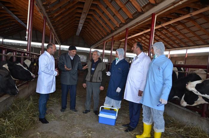 Şəmkir rayonunda epizootik sabitlik qorunur