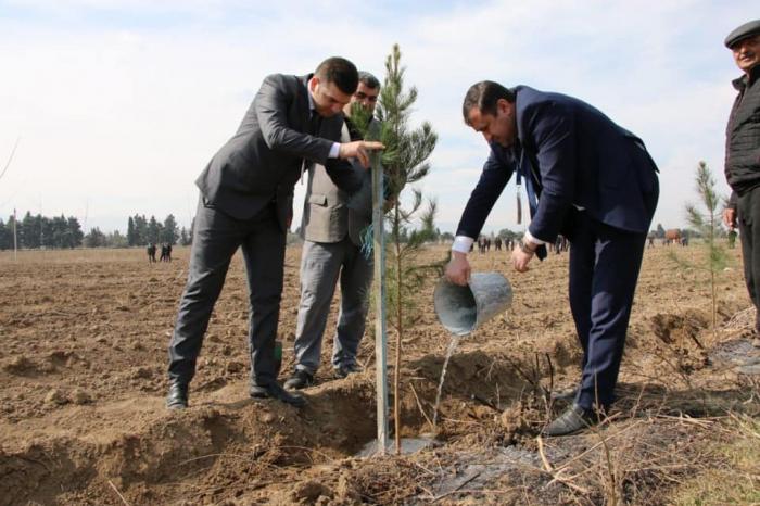 Nazirlik 300 hektar ərazidə ağac əkib