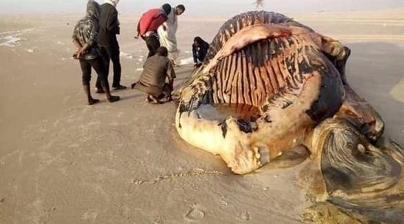نفوق حيتان عملاقة على الشواطئ الموريتانية يُثير قلق خبراء البيئة