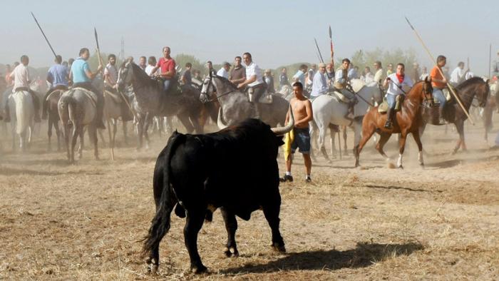 Adiós definitivo al Toro de la Vega: La Justicia española tumba el último recurso