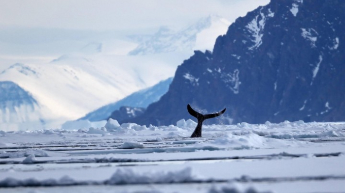 Tausende neuer Unterwasser-Berge entdeckt