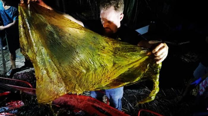 Une baleine meurt aux Philippines avec 40 kg de plastique dans l