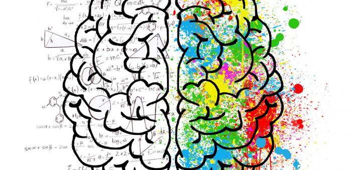 Cerveau droit ou cerveau gauche:   quelles différences ?