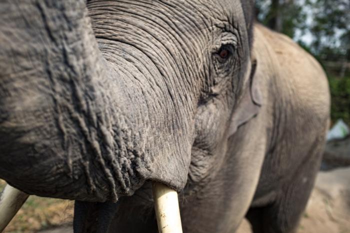 Un zoo des Yvelines se chauffe grâce aux déjections animales