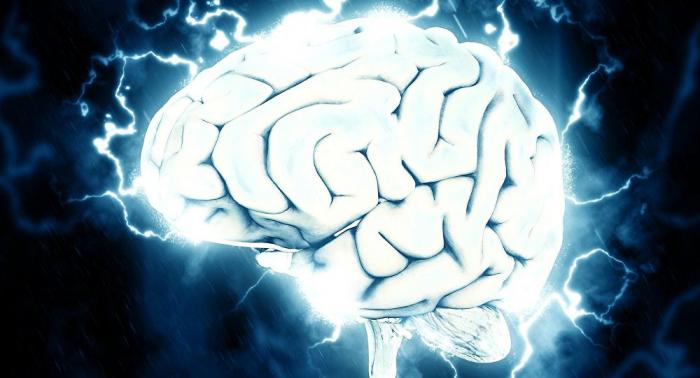 Le cerveau d'un animal mort ramené à la vie, une première