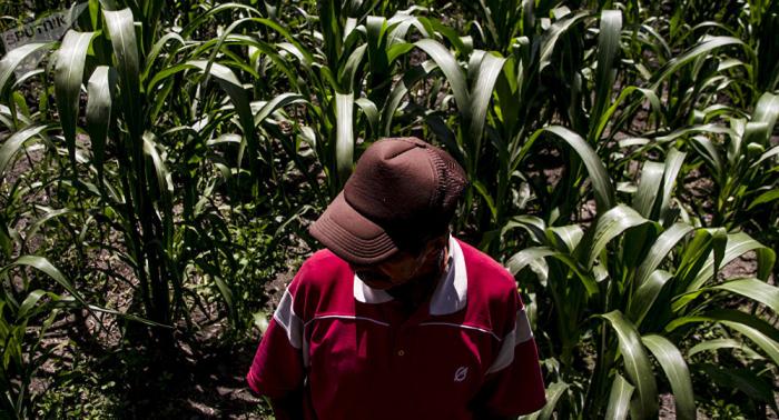 Día de la Lucha Campesina:   el mundo necesita una reforma agraria