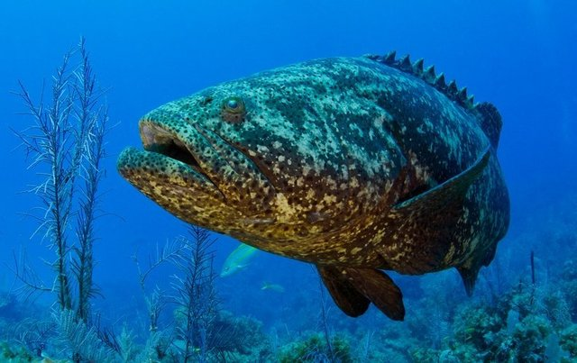 US military tries out fish as   underwater spies