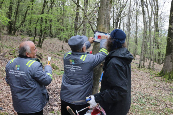 Azerbaijan creating hiking trails in national parks