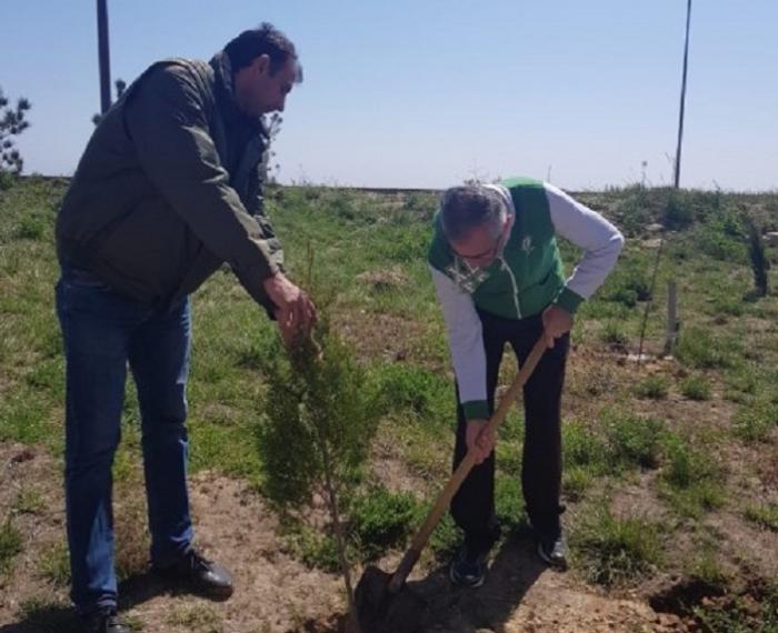 """""""Jurnalistlər binası""""nın qarşısında 300 ağac əkilib"""