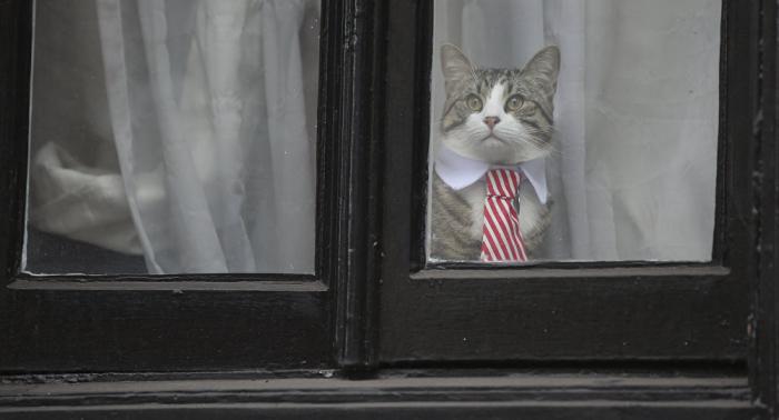 El gato de Assange espera a su amo-Video