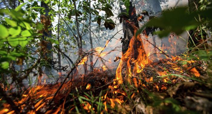 Waldbrandgefahr in mehreren Bundesländern