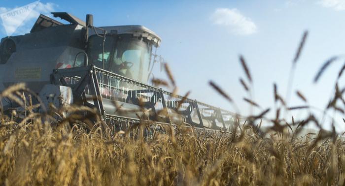 Krim plant Lieferung von Weizen und Erdölprodukten nach Syrien