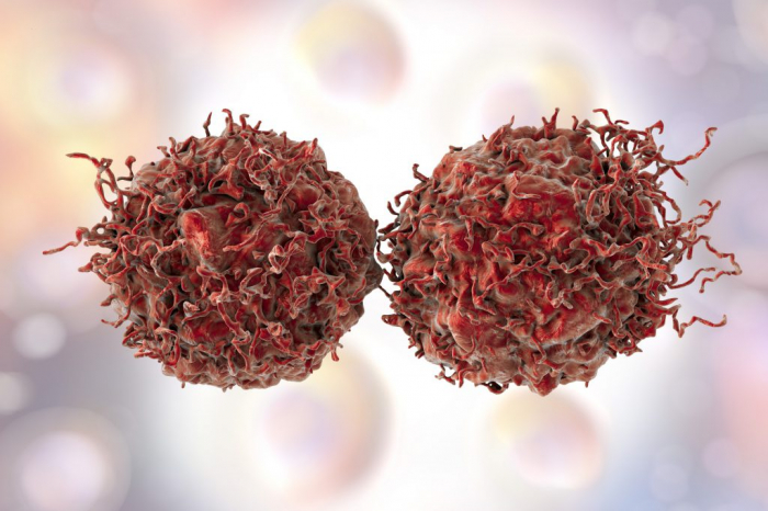 Krebsbehandlung: Neues Antibiotikum aus Naturstoffa