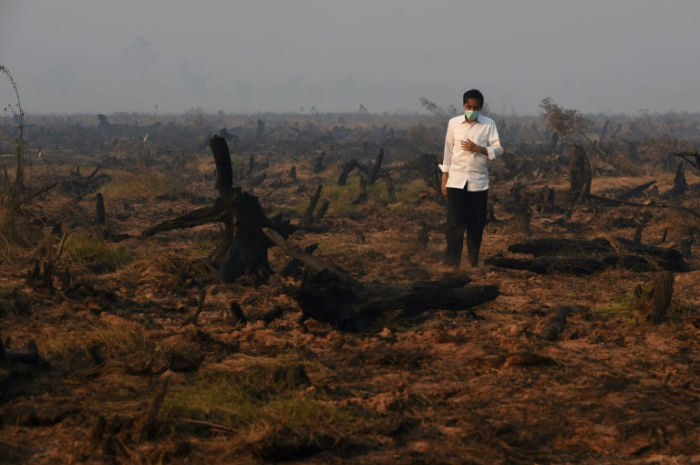 Tropical forest nearly the size of England destroyed in 2018: report
