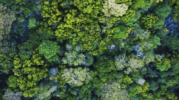 Zwölf Millionen Hektar Dschungel zerstört