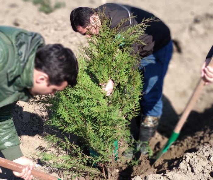 Ölkədə 60 000-dən çox ağac əkilib