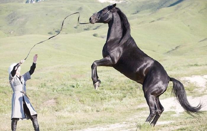 Moscou va accueillir une exposition sur les chevaux du Karabakh