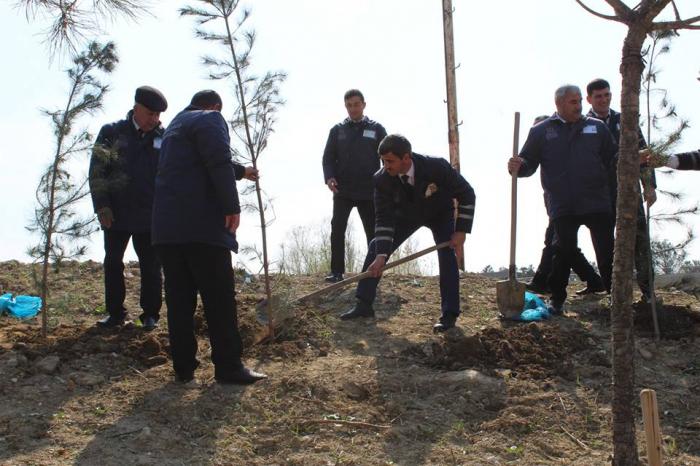 Avtovağzal Kompleksinin əməkdaşları ağac əkdi - FOTOLAR