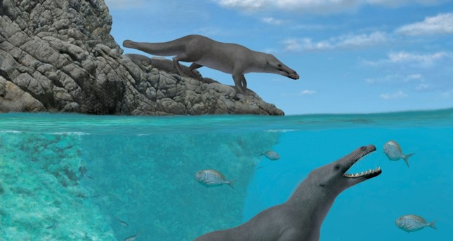 Fossil of prehistoric four-legged whale found in Peru