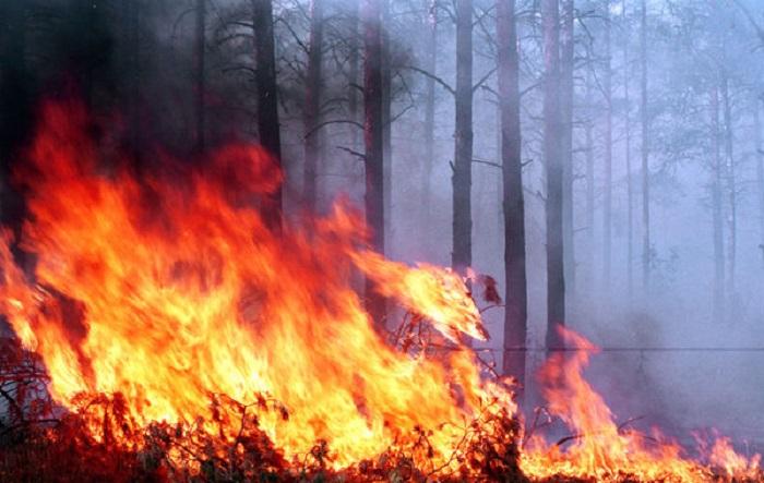 Şabranda 115 hektar ərazi yanıb