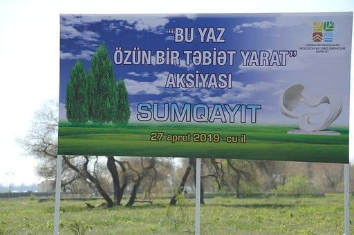 Sumqayıtda jurnalistlər ağac əkib