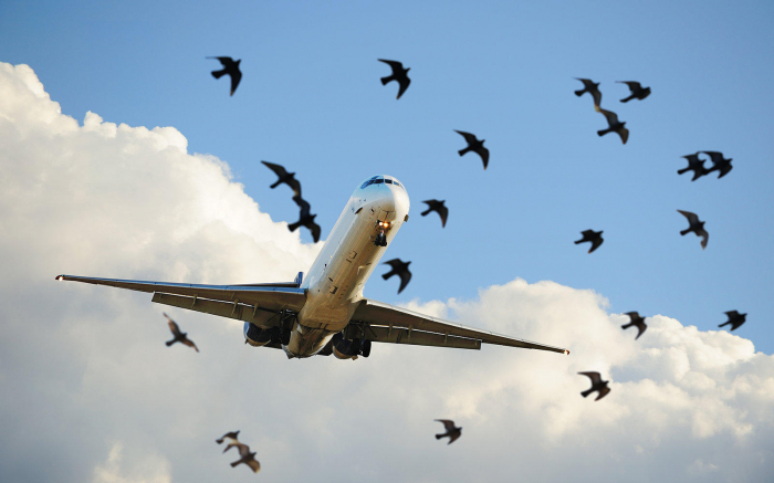 Plane experiences bird strike after taking off from Logan International Airport
