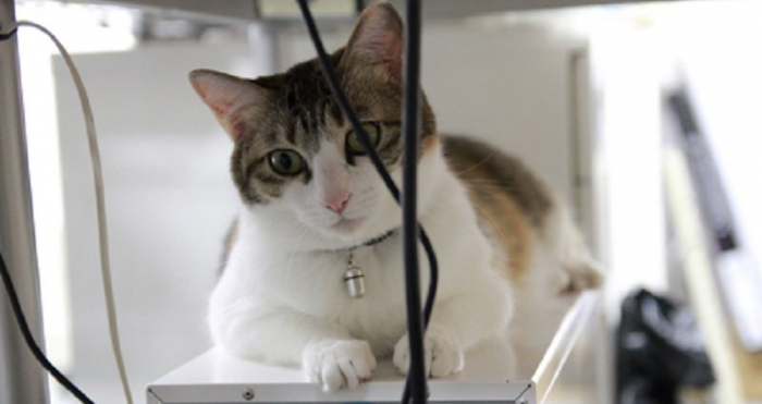 Japon:  Une entreprise adopte des chats abandonnés pour réduire le stress au travail
