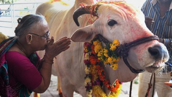 Inde : un homme tué dans une attaque liée aux vaches sacrées