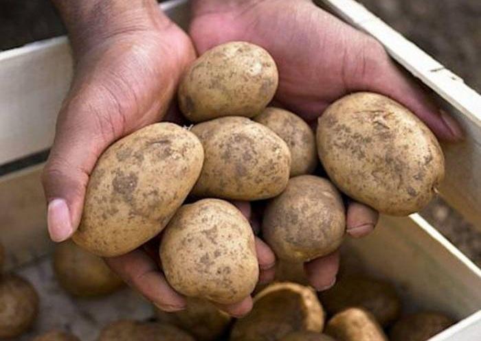 İran Azərbaycana kartof-soğan satışını dayandırır