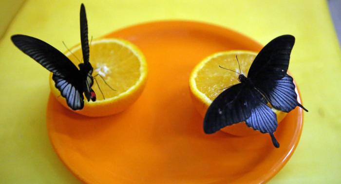 Comment détecter une carence en vitamine C et quels en sont les risques