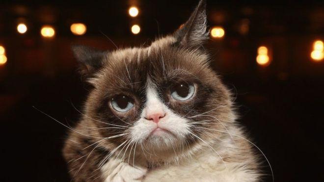 غرامبي كات: نفوق القطة الأسطورة التي حازت شهرة عالمية