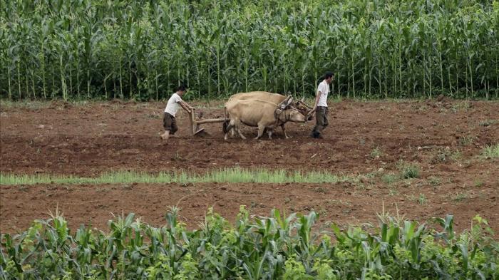Corea del Norte reduce las raciones alimentarias a 300 gramos al día