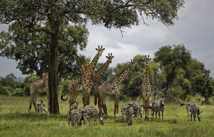 United Nations to offer first report on global biodiversity
