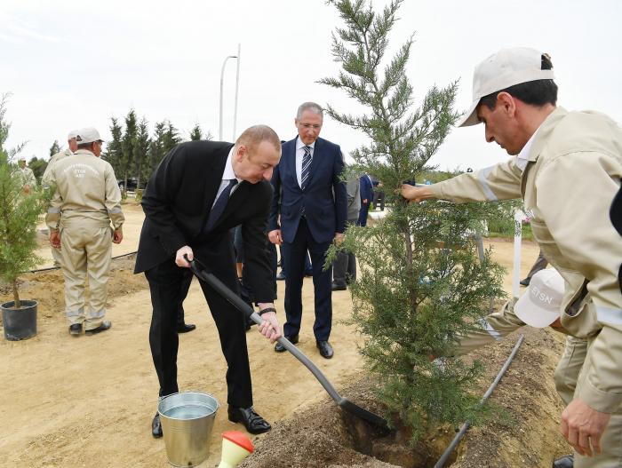 Prezident ailə üzvləri ilə ağacəkmə aksiyasında - FOTOLAR