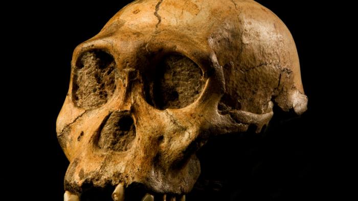 Revisan el origen de la humanidad y demuestran que el homínido que vivió hace 2 millones de años no fue nuestro ancestro