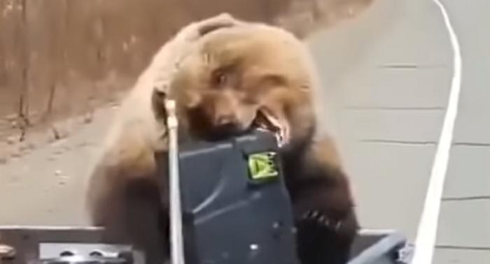 Un oso les roba una nevera a unos cazadores