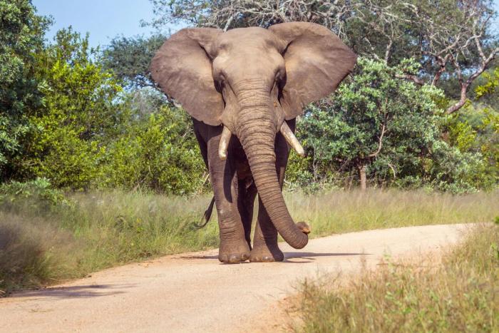 Botsuana hebt Verbot der Elefantenjagd auf
