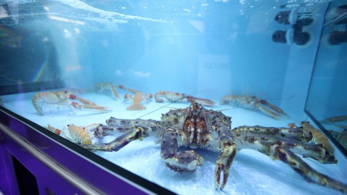 El cambio climático podría provocar ceguera a ciertos animales marinos