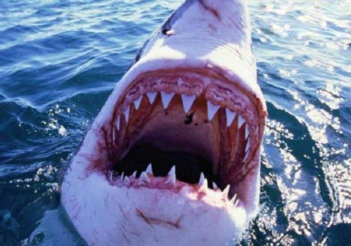 Köpək balığı 65 yaşlı kişini öldürüb