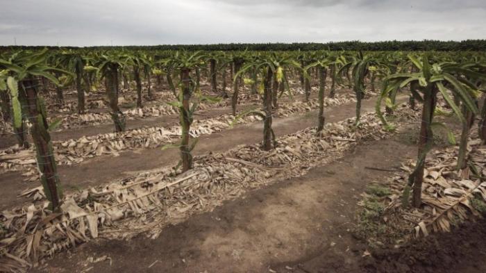 Dürre bedroht Millionen Menschen