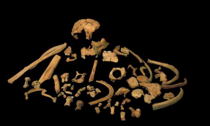 Ces hommes préhistoriques étaient cannibales par flemme de chasser