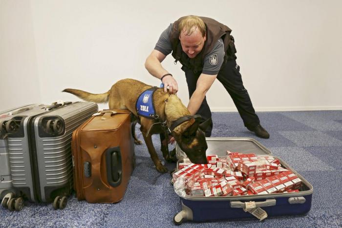 So werden Hunde bei der Polizei ausgebildet