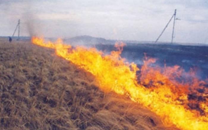 Kürdəmirdə taxıl sahələri yanıb