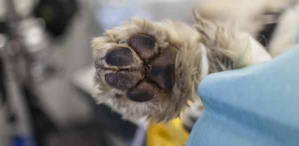 Un chien en parfaite santé euthanasié pour être enterré avec sapropriétaire