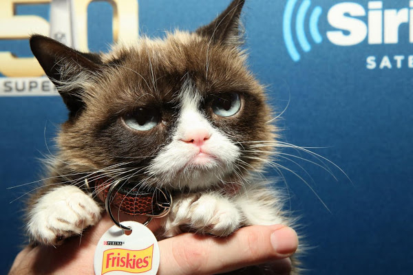 Grumpy Cat, chat star d