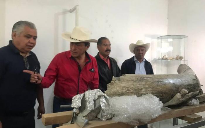 VIDEO:   Descubren en México los fósiles de un mamut de más de 10.000 años