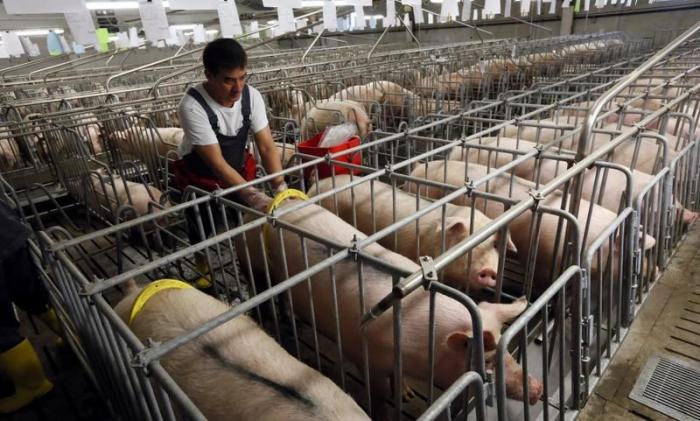 China stoppt Schweinefleisch-Importe von kanadischer Firma