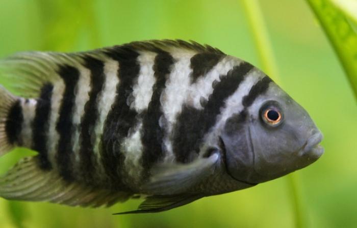 Ce petit poisson aussi souffre de chagrins d