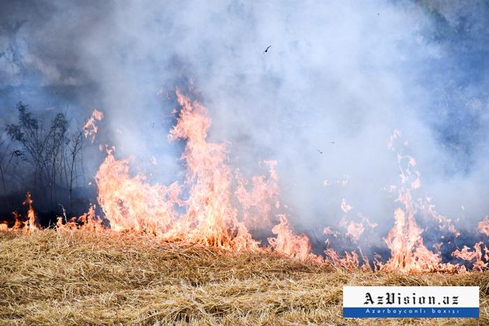 Qaxda 20 hektar taxıl sahəsi yanıb