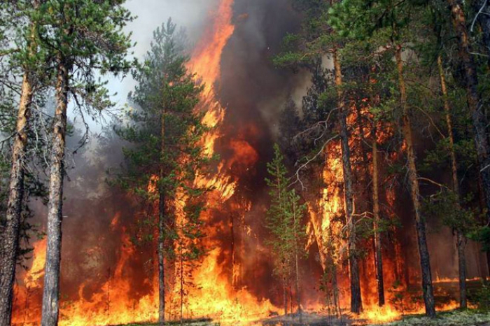 Forests burning in western Turkey